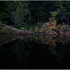 Adirondacks Newcomb Lake Shore Detail 16 July 2017