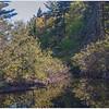 Alders on the Bog River