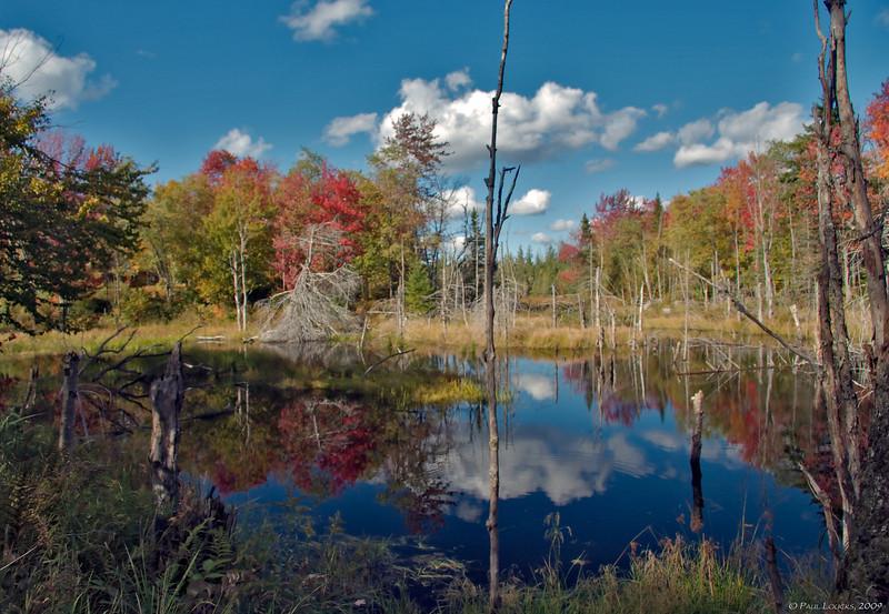 Marsh near Cook Pond