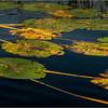 Adirondacks Little Tupper Lake July 2015  North Inlet Lilypads 3