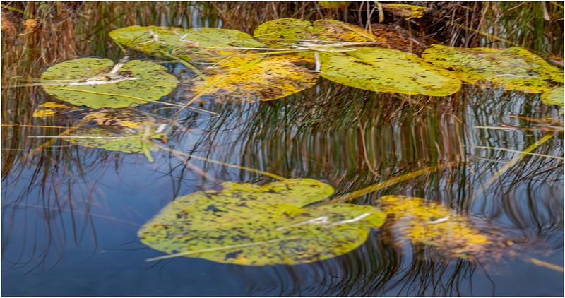 Adirondacks Bog River Hitchins Pond 20 September 2019