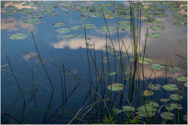 Adirondacks Chateaugay Lake Lilypads 20 August 2017