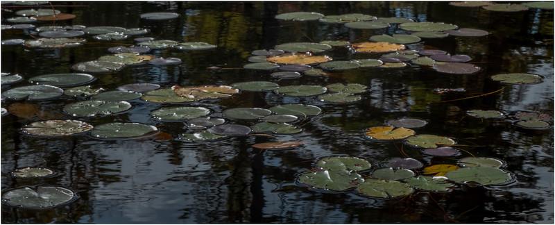 Adirondacks Bog River 14 September 2019