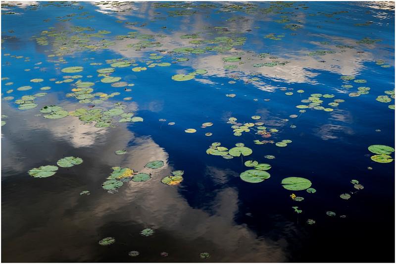 Adirondacks Chateaugay Lake Lilypads 17 August 2017