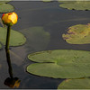 Adirondacks Forked Lake Yellow Waterlily 2 July 2011