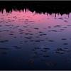 Adirondacks Cedar River Flow Lilypads and Sunrise Reflection 1 October 2012