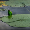 Adirondacks Chateaugay Lake Lilypads 29 August 2017