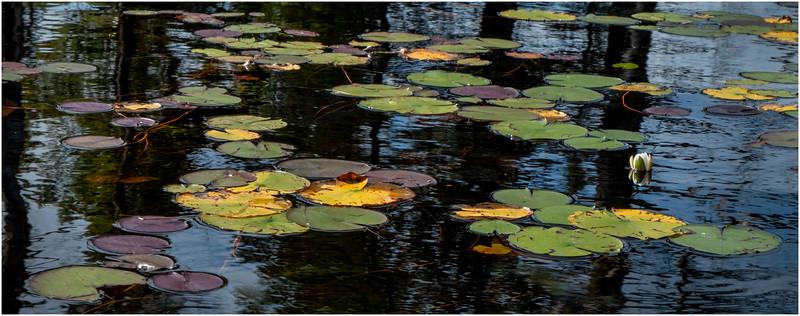 Adirondacks Bog River 13 September 2019