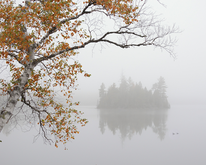 Buck Island, Elk Lake