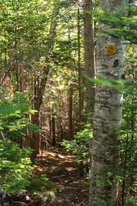Blueberry Mt. Trail