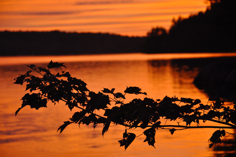 Leaves at Sunset on Upper Saranac Lake. 2011.