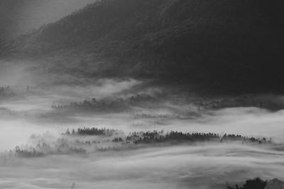 Morning Fog Black and White