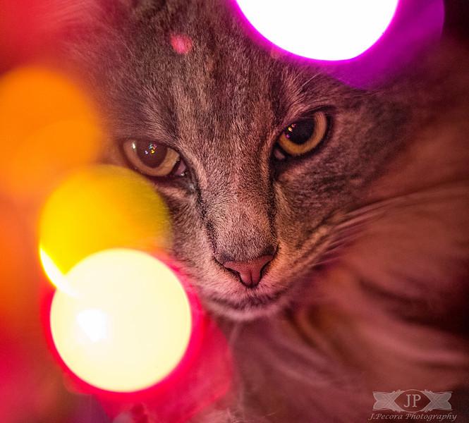 Jazz Under the Christmas Tree
