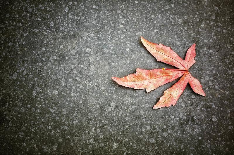 20130112 Leaf