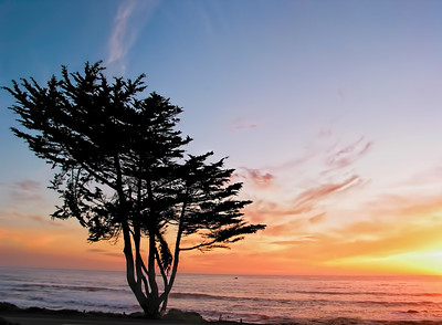 Sunset and Tree at Cambria