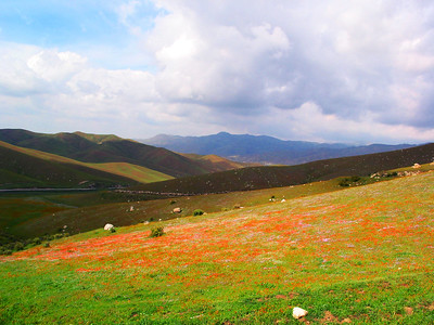 Hills in Spring