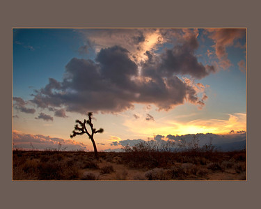 Joshua Tree in California City, Mohave Desert.