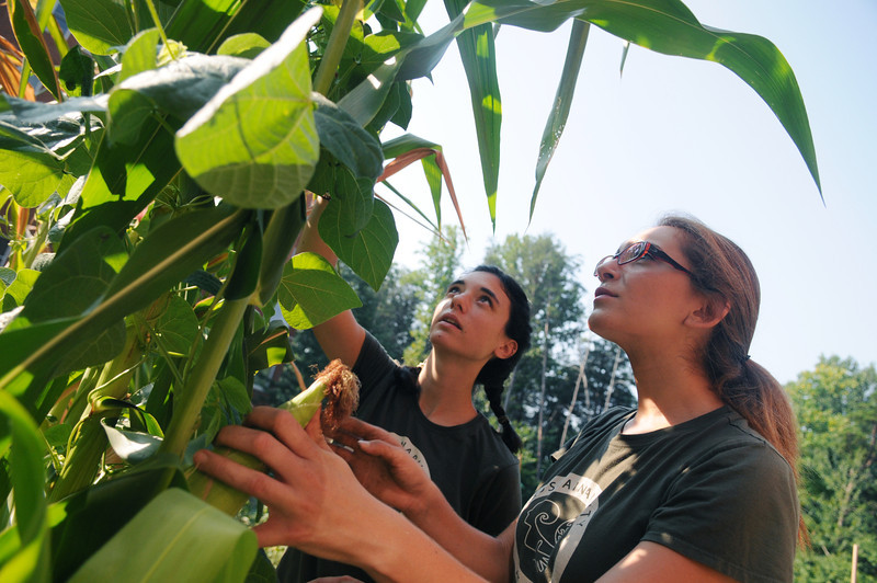 Amanda Wall and Danielle Wyam, Sustainability Projects Specialist, Office of Sustainability picking vegetables in the organic garden. Photo by Evan Cantwell/George Mason University