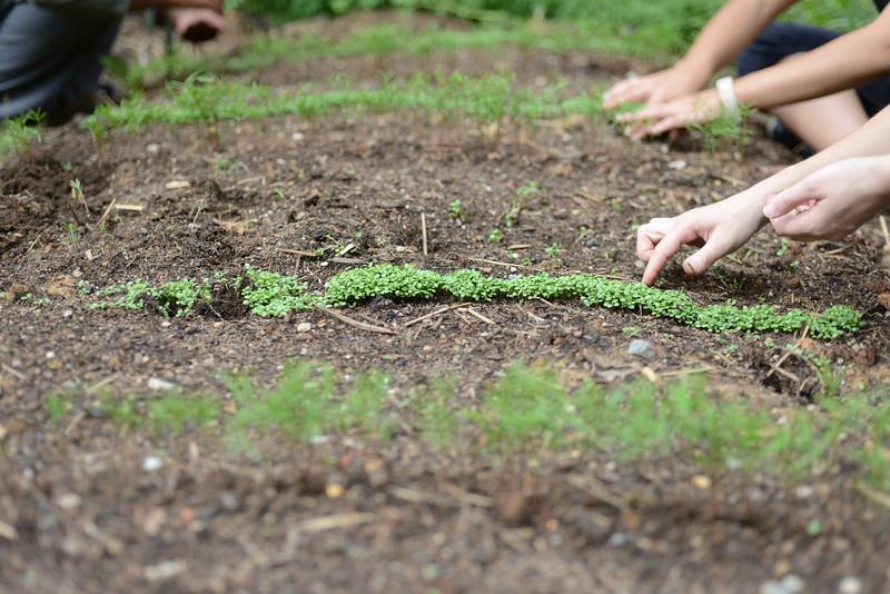 Potomac Heights Vegetable garden