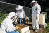 Mason students, with Kathleen Curtis, executive assistant to CHSS dean and member of the Beekeepers Association of Northern Virginia (BANV), check on colonies of bees maintained on Fairfax Campus. The bee colonies are maintained by members of the BANV, with help of a grant from the Office of Sustainability, and used in educational workshops through the Mason Sustainability Institute. Photo by Alexis Glenn/Creative Services/George Mason University