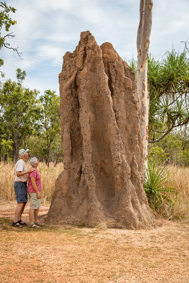 This is an active termite mound which lis over 15 feet tall.