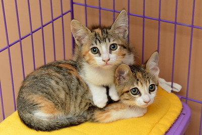 Amber and Aster - Adopted