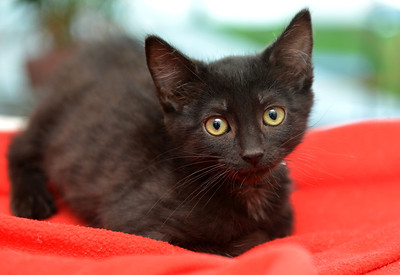 Freya - Adopted