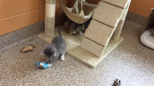 Little Mermaid  Kittens