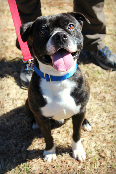 Tommy, neutered male, up-to-date on vaccs, Needs a home! Please contact Susie Cobb @ (803) 279-8069 for more adoption information.