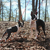 Samantha and Izzy - A Bonded pair. Both sweet and loving, up to date and healthy. Needs a home! Please contact Susie Cobb @ (803) 279-8069 for more adoption information.