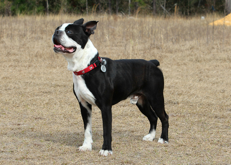 Rowdy, appr 1yr old, neutered male, up-to-date on vaccs, Needs a home! Please contact Susie Cobb @ (803) 279-8069 for more adoption information.