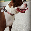 Rita - Needs a home! Please contact Susie Cobb @ (803) 279-8069 for more adoption information.