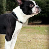 Rocky - Needs a home! Please contact Susie Cobb @ (803) 279-8069 for more adoption information.