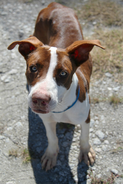 This little guy needs a home. Please contact Rick for adoption info: rherring1018@comcast.net