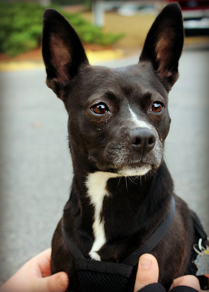- Needs a home! Please contact Susie Cobb @ (803) 279-8069 for more adoption information.