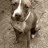 Journey, female, needs a home. Please contact Rebecca for details. 706-339-0278