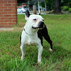 She needs a home! Please contact Susie Cobb @ (803) 279-8069 for more adoption information.