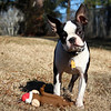 Jasper- appr. 5 month old, neutered male, up to date on shots and healthy. Very sweet, playful.  Needs a home! Please contact Susie Cobb @ (803) 279-8069 for more adoption information. UPDATE: ADOPTED!!