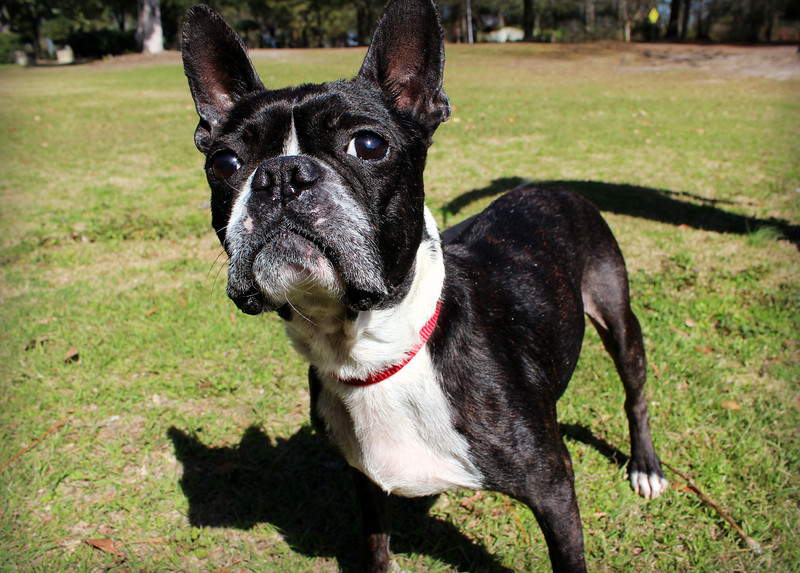 Tate, neutered male, up-to-date on vaccs, Needs a home! Please contact Susie Cobb @ (803) 279-8069 for more adoption information.