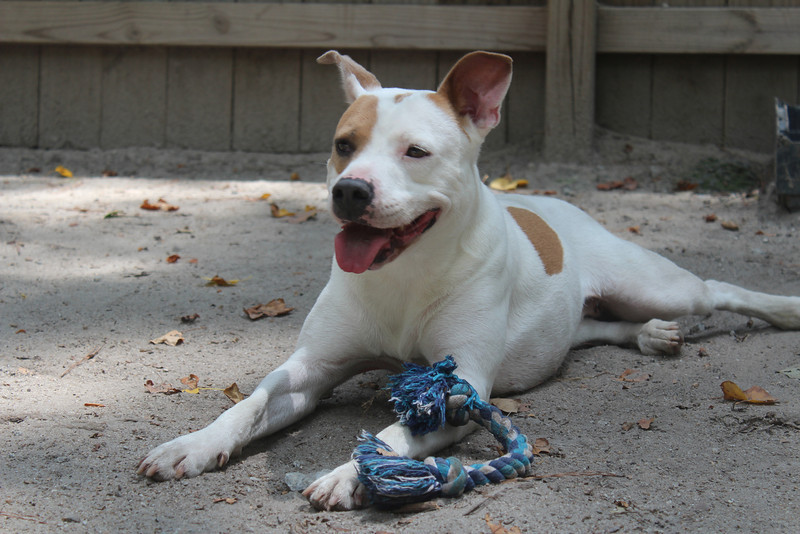 -Sara -  4 years old spayed, up to date, heartworm neg. Owner surrender, rescued with her son, very skinny. Now healthy, loves to play fetch, great with people and kids. No cats.