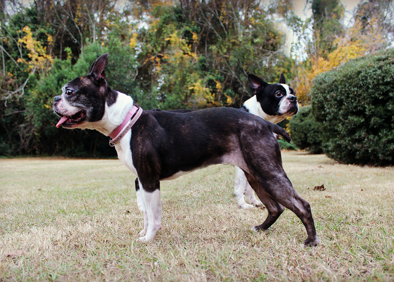 Rocky and Reba - Needs a home! Please contact Susie Cobb @ (803) 279-8069 for more adoption information. These two need to be adopted together!