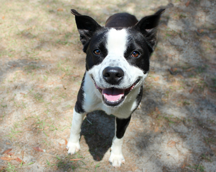 Finn - Needs a home! Please contact Susie Cobb @ (803) 279-8069 for more adoption information.