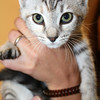 Female, up-to-date, rescued from the Augusta area, 14 weeks.<br /> UPDATE: Found a home!