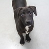 Meet Cooper,  he's a neutered male, lab mix, appr 3 months old. He''s at Augusta Animal Services, his ID number is A152513.<br /> <br /> For more info please contact:<br /> Augusta Animal Services<br /> 4164 Mack Ln, <br /> Augusta, GA 30906<br /> (706) 790-6836