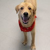 Meet Terry,  he's a neutered male, lab mix, appr 1 year old. He''s at Augusta Animal Services, his ID number is A152031.<br /> <br /> For more info please contact:<br /> Augusta Animal Services<br /> 4164 Mack Ln, <br /> Augusta, GA 30906<br /> (706) 790-6836