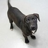 Meet Cooper,  he's a neutered male, lab mix, appr 3 months oldl. He''s at Augusta Animal Services, his ID number is A152513.<br /> <br /> For more info please contact:<br /> Augusta Animal Services<br /> 4164 Mack Ln, <br /> Augusta, GA 30906<br /> (706) 790-6836