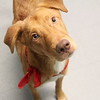 Meet Dawn,  he's a neutered male, lab mix. He''s at Augusta Animal Services, his ID number is A151750.<br /> <br /> For more info please contact:<br /> Augusta Animal Services<br /> 4164 Mack Ln, <br /> Augusta, GA 30906<br /> (706) 790-6836