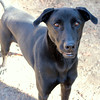 Meet Swayze - Augusta Humane Society