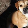 Toby - Augusta Humane Society