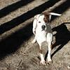 Petey - Augusta Humane Society